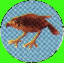 Arrow Sparrowhawk.png